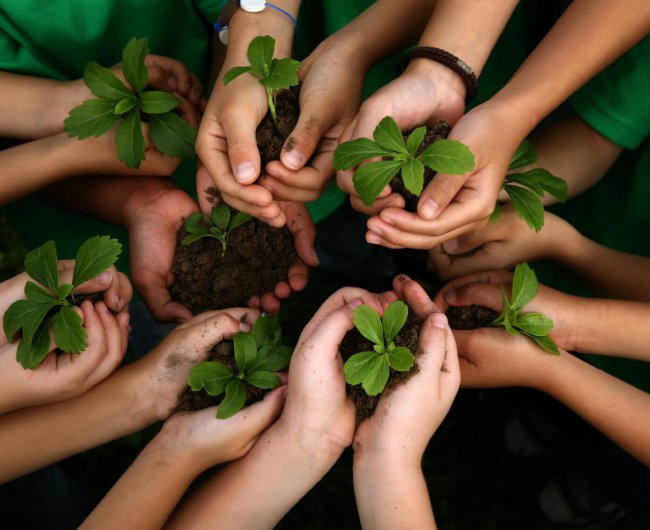 Image of Hands holding leaves and soil