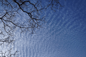 Photo of tree, clouds and sky