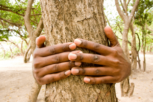 Photo of hands around a tree trunk