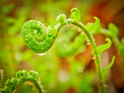 Start the change: image of Unfurling fern sprouts by Thomas James Caldwell on Flickr